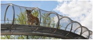 Big Cat crossing at the Philadelphia Zoo